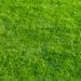 隣の芝は青そうに見える。